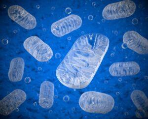 mitochondria – 4